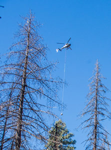 gila-trout-arrive-at-the-treetops-over-mineral-creek-gila-natl-forest-in-areate-helitank-photo-craig-springer-usfws-resized